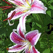 White Lillies 2 Poster