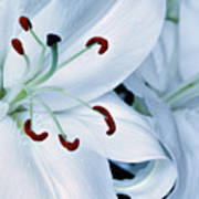 White Lily Triptych Part1 Poster