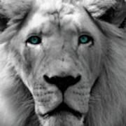 White Lion Hue Poster