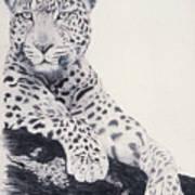 White Loepard Poster