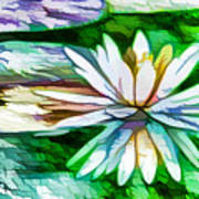 White Lotus In The Pond Poster