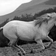 White Mare Gallops #1 -  Close Up Black And White Poster