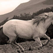 White Mare Gallops #1 -  Close Up Sepia Poster