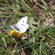 White Moth Poster