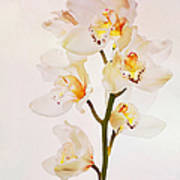 White Orchids Faux Watercolor Poster