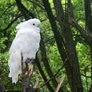 White Parrot Poster