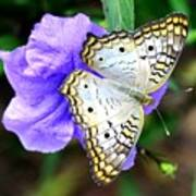 White Peacock Butterfly On Purple 2 Poster