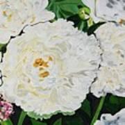 White Peony Garden Poster