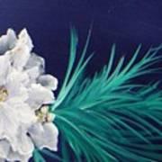 White Poinsettia On Blue Poster