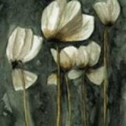 White Poppies Poster