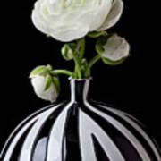 White Ranunculus In Black And White Vase Poster by Garry Gay