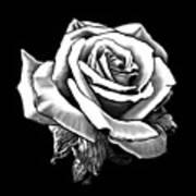 White Rose Poster by Melodye Whitaker