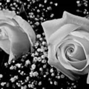 White Roses Bw Fine Art Photography Print Poster