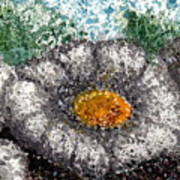 White Saguaro Cactus Blossom Poster