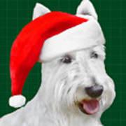 White Scottish Terrier Christmas Plaid Poster