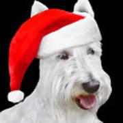 White Scottish Terrier Dog Christmas Card Poster