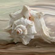White Shell Poster by Linda Sannuti
