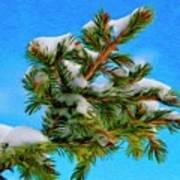 White Snow On Evergreen Poster