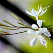 White Stem Flowers Poster