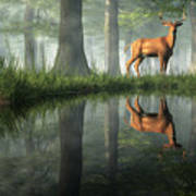 White Tailed Deer Reflected Poster