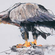 White Tailed Sea Eagle Poster