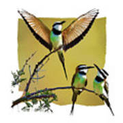 White Throated Bee Eater Pf Poster