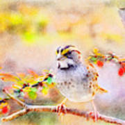 White Throated Sparrow - Digital Paint 1                                             Poster