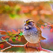 White Throated Sparrow - Digital Paint 3 Poster
