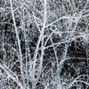 White Tree Black Night Poster