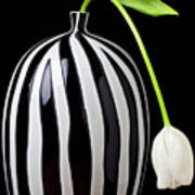 White Tulip In Striped Vase Poster