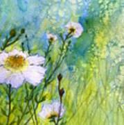 White Wild Poppies Poster