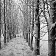 White Winter Pathway Poster