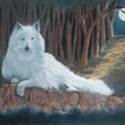 White Wolf Poster by Charles Hubbard