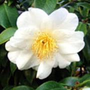 White-yellow Flower. Little Sun Poster
