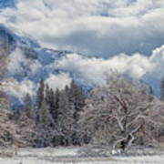 White Yosemite Poster