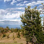 Whitebark Pine Trees Overlooking Crater Lake - Oregon Poster