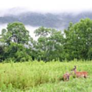 Whitetail Deer 1 Poster