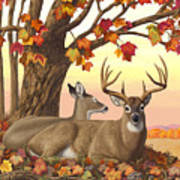 Whitetail Deer - Hilltop Retreat Horizontal Poster by Crista Forest