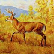 Whitetail Deer In Aspen Woods Poster by Crista Forest