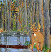 Whitetail Deer In Swamp Poster