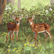 Whitetail Deer Twin Fawns Poster by Crista Forest