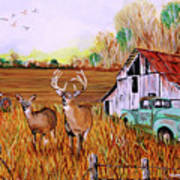 Whitetail Deer With Truck And Barn Poster
