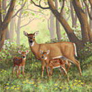 Whitetail Doe And Fawns - Mom's Little Spring Blossoms Poster