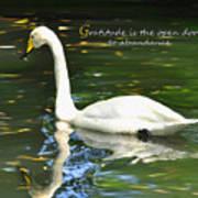 Whooper Swan Gratitude Poster