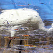 Whooping Crane Reflection Poster