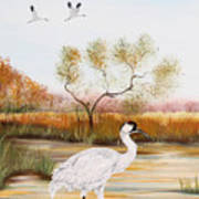 Whooping Cranes-jp3152 Poster