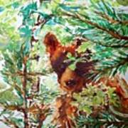 Wild Bear Peek-a-boo Watercolour Poster