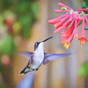 Wild Birds - Hummingbird Art Poster
