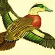 Wild Duck Poster