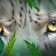 Wild Eyes - Snow Leopard Poster